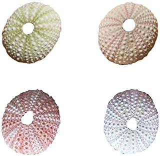 Huang 4 pièces coquilles d'oursin de mer Naturelles délicates coquilles de conque durables Uniques Bricolage Artisanat pou...