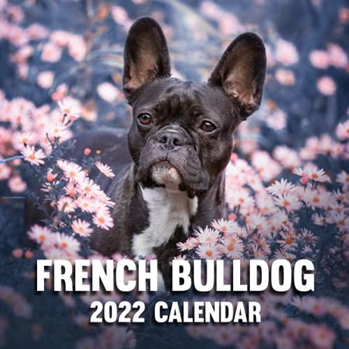 French Bulldog 2022 Calendar: 12 Months - Dog Lover Gift