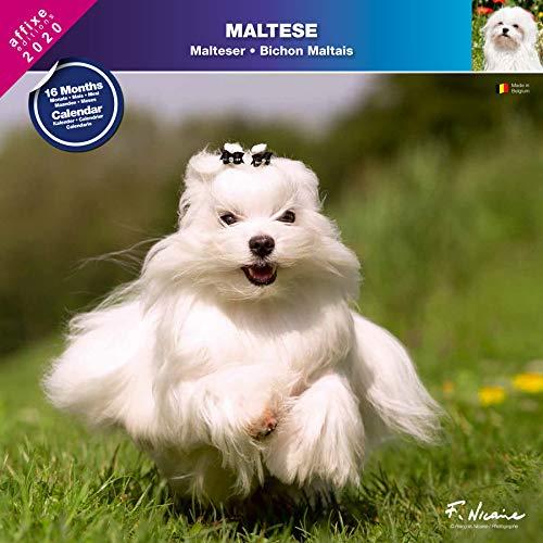 Kanister Kalender 2020 (Malteser)