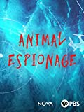 Animal Espionage