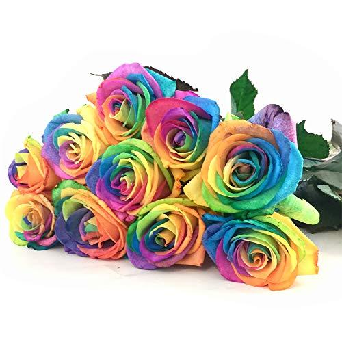 10 Regenbogen-Rosen im Bund: groß, unbearbeitet - Rosenbote Blumenversand