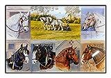 N / A James Hamilton 1000 T - Puzzle (68 x 49 cm), diseño de caballo