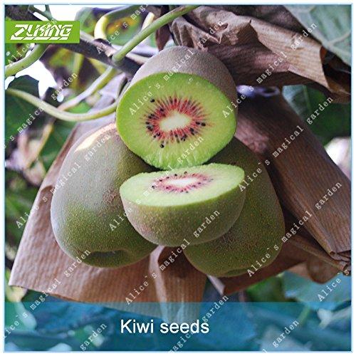 ZLKING 100 Pcs fruits bio Rare naturel Bonsai frais Sweet Seeds arbres fruitiers plantes exotiques Décorée Jardin