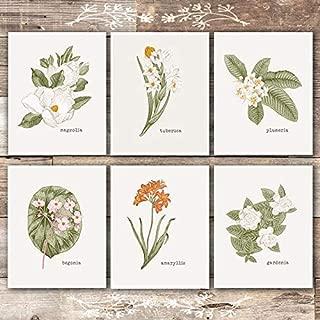 Vintage Botanical Wall Art Prints (Set of 6) - Unframed - 8x10s | Flower Wall Decor