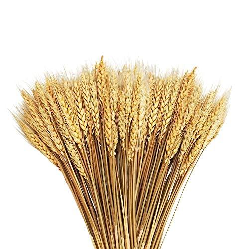 Tallos de trigo seco de 20.5 pulgadas, 100 tallos de flores secas, trigo 100% natural, para decoración del hogar, cocina, mesa de boda