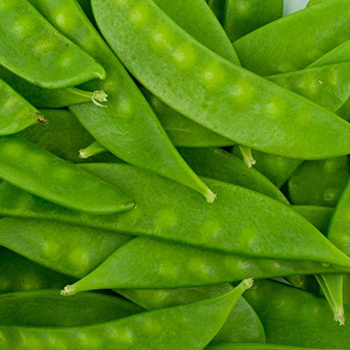 Mammoth Melting Sugar Pod Snow Pea Garden Seeds