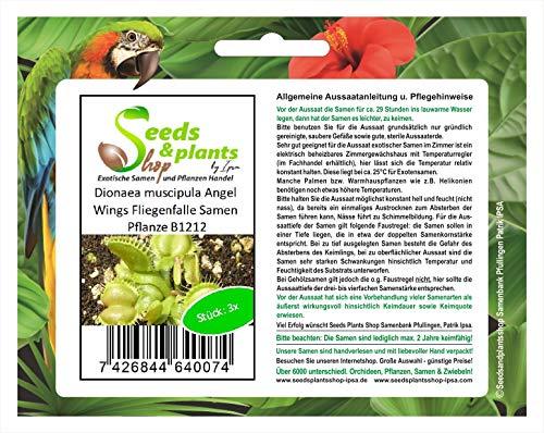 Stk - 3x Dionaea muscipula Angel Wings Fliegenfalle Pflanzen - Samem B1212 - Seeds Plants Shop Samenbank Pfullingen Patrik Ipsa