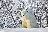 LFNSTXT Rompecabezas para adultos, 1000 piezas, diseño de osos polares de la madre de los osos polares, para adultos, familias y niños, juguete educativo para la decoración del hogar (70 x 50 cm)