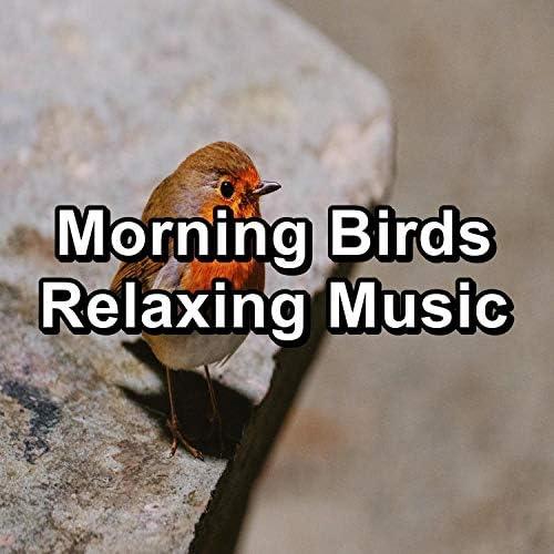 Spa Music, Spa Relax Music & Spa