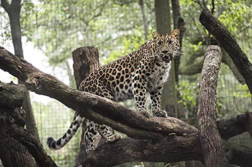 RHUK Tangram 1000 Piezas Madera Leopardo Bosque Gato Grande Juego Infantil Arte...