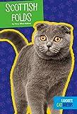 Scottish Folds (Favorite Cat Breeds)