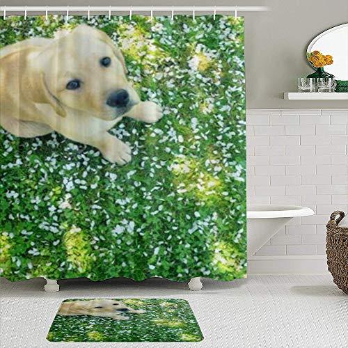 Lieteuy Juego de Cortinas y tapetes de Ducha de Tela,Labrador Retriever Perro canino Sentado en el césped,Cortinas de baño repelentes al Agua con 12 Ganchos, alfombras Antideslizantes