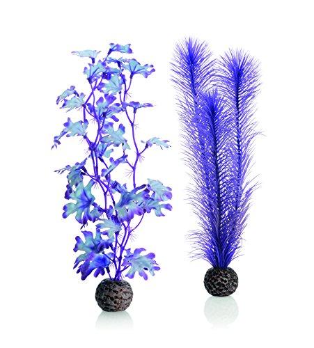 Oase 46080 Seetang Set mittelgroß, lila | Aquaristik | Aquarium | Pflanzenset | Ornamente | Dekoration