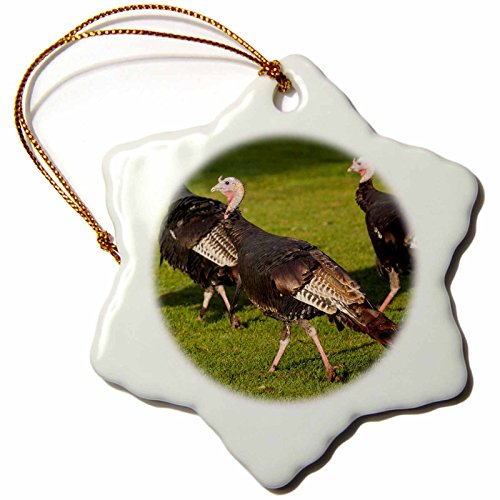 3dRose' USA, Minnesota, Mendota Heights, Wild Tom Turkeys-Us24 Bfr0167-Bernard Friel Snowflake Ornament, Multi-Colour, 3-Inch