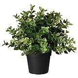 Ikea FEJKA Topfpflanze, künstlich, Oregano, 9 cm, Nicht Angegeben