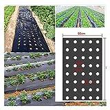 5ホール温室穴あきPEフィルム 95cm幅0.02mmの厚さ農業雑草ブラックマルチ 庭の植物膜植物マルチ Size  0.95x50m