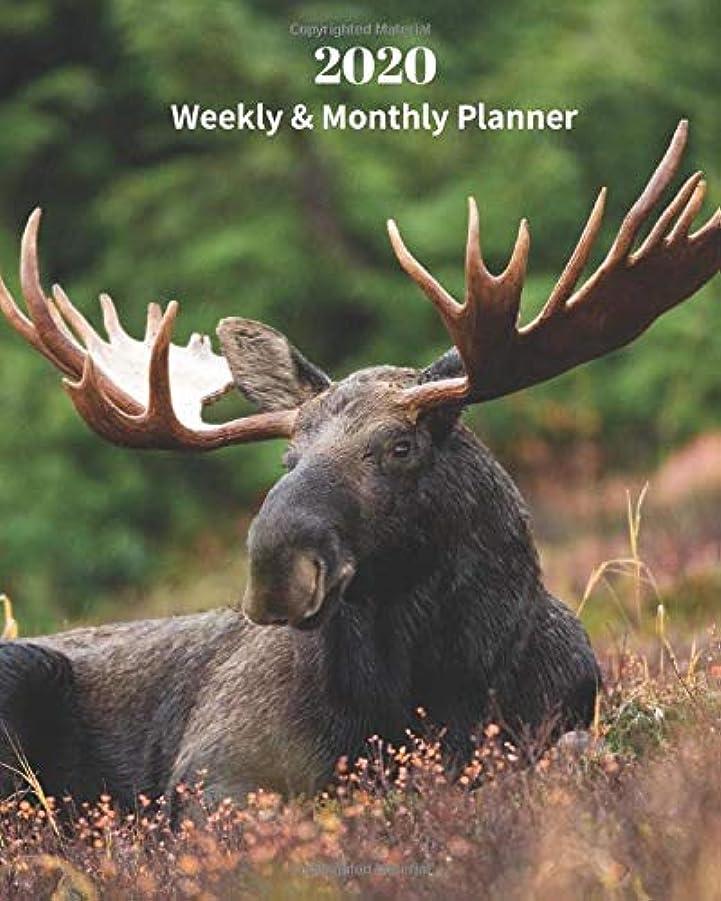 データム暗殺する分布2020 Weekly and Monthly Planner: Moose- Monthly Calendar with U.S./UK/ Canadian/Christian/Jewish/Muslim Holidays– Calendar in Review/Notes 8 x 10 in.-Wildlife  Nature