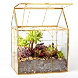 ElegantLife Succulent Terrarium, Geometric Decorative Cubic Moss Glass Tabletop Flower Plant Box Planter Gold 2 Different Size Set Gold (No Plant Included)