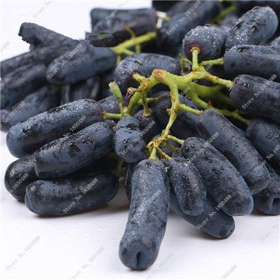 Pépins de raisin Gold Finger vigne vivaces herbes plantes succulentes, Juicy Fruit non-OGM légumes semences fournitures de jardinage 50 Pcs 2