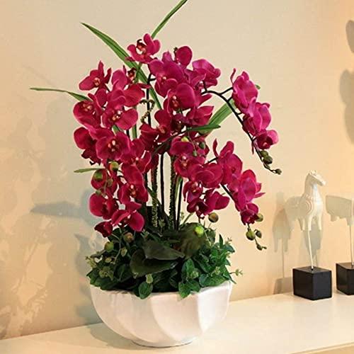 Rode Phalaenopsis Zaden, 100 Stks/zak Phalaenopsis Zaden Orchidee Bloem Bonsai Planten Multi-Color Bloei Indoor Outdoor…