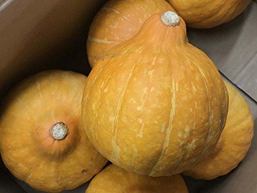 茨城県産 生食用かぼちゃ コリンキー 5〜7玉入り(1箱)