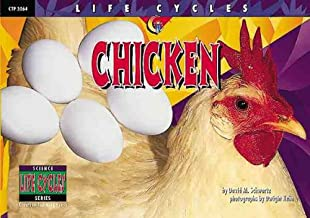 Chicken (Life Cycles)
