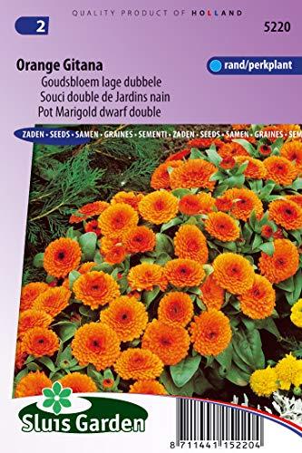 Topf Ringelblume Orange Gitana Zwerg Double Samen