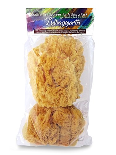 Natural Sea Sponges for Artists - Unbleached 5'-5.5' 2pc Value Pack: Great for Painting, Decorating, Texturing, Sponging, Marbling Effects, Faux Finishes, Crafts, More