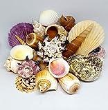 16 Medium SeaShells, Natural Beach Mix Sea Shells, Craft und Decor Shell by Shells4U