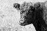 'Cocina Protección antisalpicaduras 'Mrs. Cow | designersgroup | Cristal Acrílico | baldosas Protección para el horno | Cocina | Cocina azulejos | azulejos Espejo | posterior | 60x 40cm