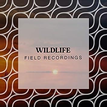 Gentle Garden Wildlife Field Recordings