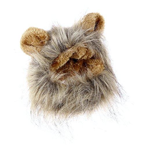 obtener pelucas gato en internet