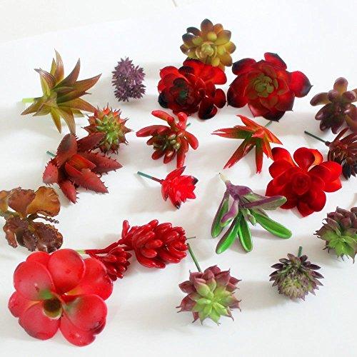 Balansoho - 12 piante grasse artificiali decorative miste non in vaso per decorazioni da parete fai da te per la casa (rosso/viola, invio casuale)