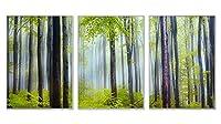 シルバー アルミ合金フレーム アートプリント ホーム装飾画 トリプル装飾画(自然の風景、森、木、朝、霧、雨の後)35x50cmx3枚