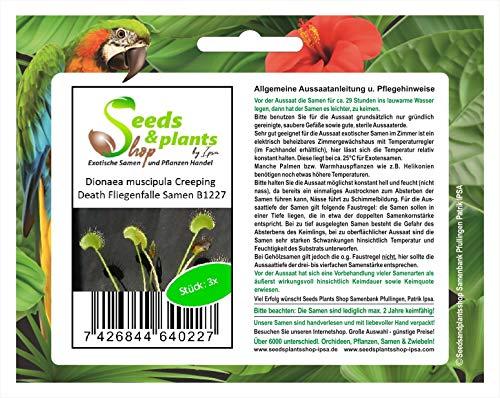 Stk - 3x Dionaea muscipula Creeping Death Fliegenfalle Pflanzen - Saat B1227 - Seeds Plants Shop Samenbank Pfullingen Patrik Ipsa