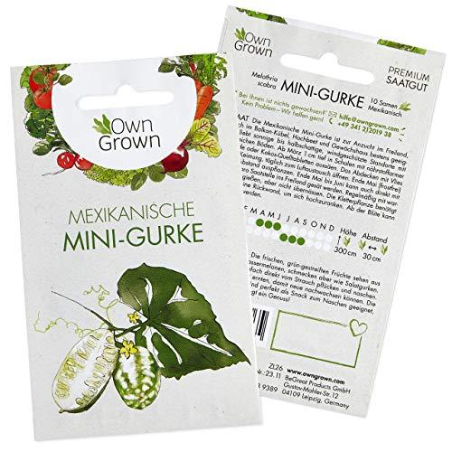 Mini Gurken Samen (Melothria scabra): Premium Mini Salatgurke Samen zur Aussaat, Sorte Mexikanische Minigurke – Gemüse Samen f. ca 10 Snackgurken Pflanzen – Snackgurken Samen, Samen Gurke von OwnGrown
