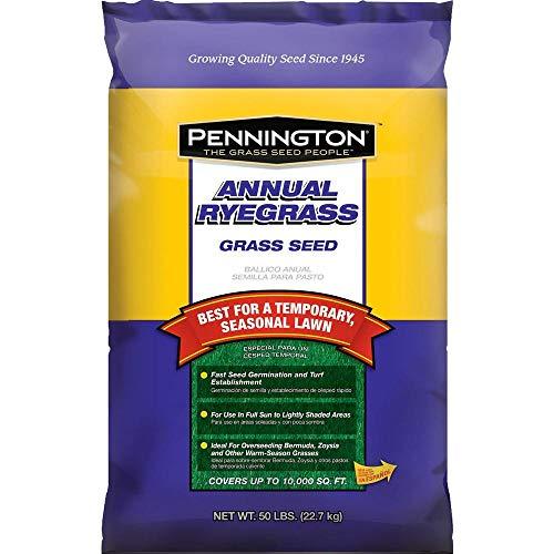 Pennington Annual Ryegrass Retail Bag to Overseed Warm Season Grasses, 50 lb