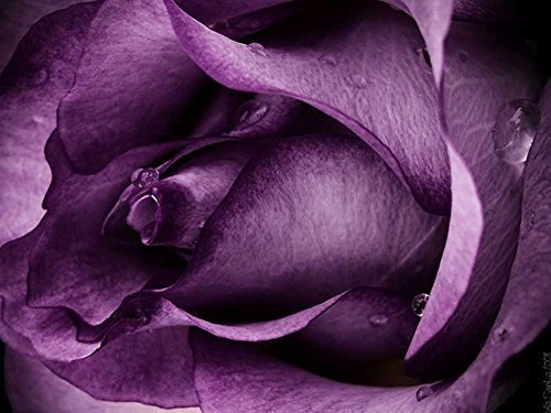 SUN-Shine Oil Painting Purple Rose Pattern Canvas Prints Framed For Home Wall Decoration 12x16IN