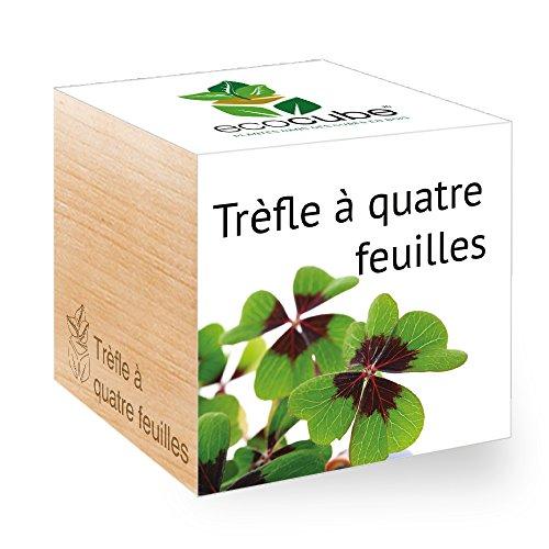 Feel Green Ecocube Trèfle À Quatre Feuilles, Idée Cadeau (1