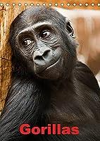 Gorillas (Tischkalender 2022 DIN A5 hoch): Die sanften Riesen Afrikas (Monatskalender, 14 Seiten )