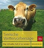 Tierische Wettervorhersage: Was Schwalbe, Kuh & Co. verraten