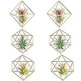 Huante - Lote de 6 soportes para plantas de aire, decoración de mesa de metal, moderna, jardinera geométrica, Tillandsia, expositor Himmeli Décor