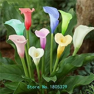Comprar bulbos de calas de colores online