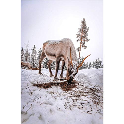 LucklyingBao Canvas Painting Wall Art Reindeer in The Snow is Foraging Hd Picture Printing Poster Canvas Painting Decoration Painting Picture Living Room Bedroom,No Frame 50×70Cm