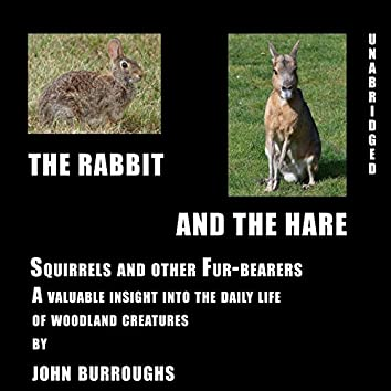 The Rabbit and the Hare (Unabridged), a valuable insight into the daily life of woodland creatures, by John Burroughs