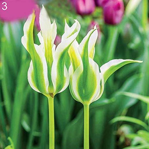 TankMR 100 Stks Tulp Wilde Bloem Zaden Planten, Open-Bestuifde, Bijen, Humming Vogels, Vlinders, Bestuivers, Office Garden Decor