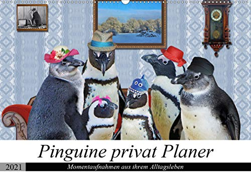 Pinguine privat Planer (Wandkalender 2021 DIN A2 quer)