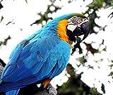 OKOUNOKO Pinturas Artísticas Pájaro Animal De Cerca Dibujo para Colorear Moderno Kits De Bricolaje Obra De Arte Casa Decoración Sin Marco 40X50Cm
