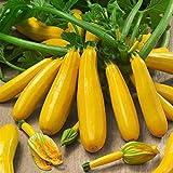 inkeme giardino - 10 pezzi semi di zucchetti gialli, zucchini 'goldberry f1' semi di ortaggi biologici ad alto rendimento resistente perenne per giardino balcone/terrazzo
