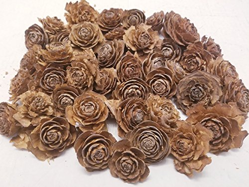 Cedar Rose Pine Cones - Perfect for Potpourri, Bowl Fillers, Home Decor, Crafting - Can be used in all Seasons, Best for Fall and Winter